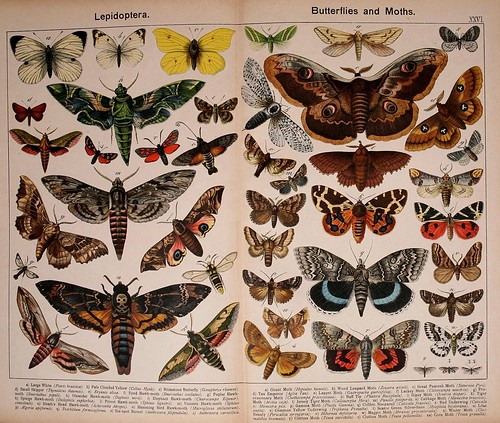 019-Natural history of the animal kingdom for the use of young people..- 1889-William Forsell Kirby