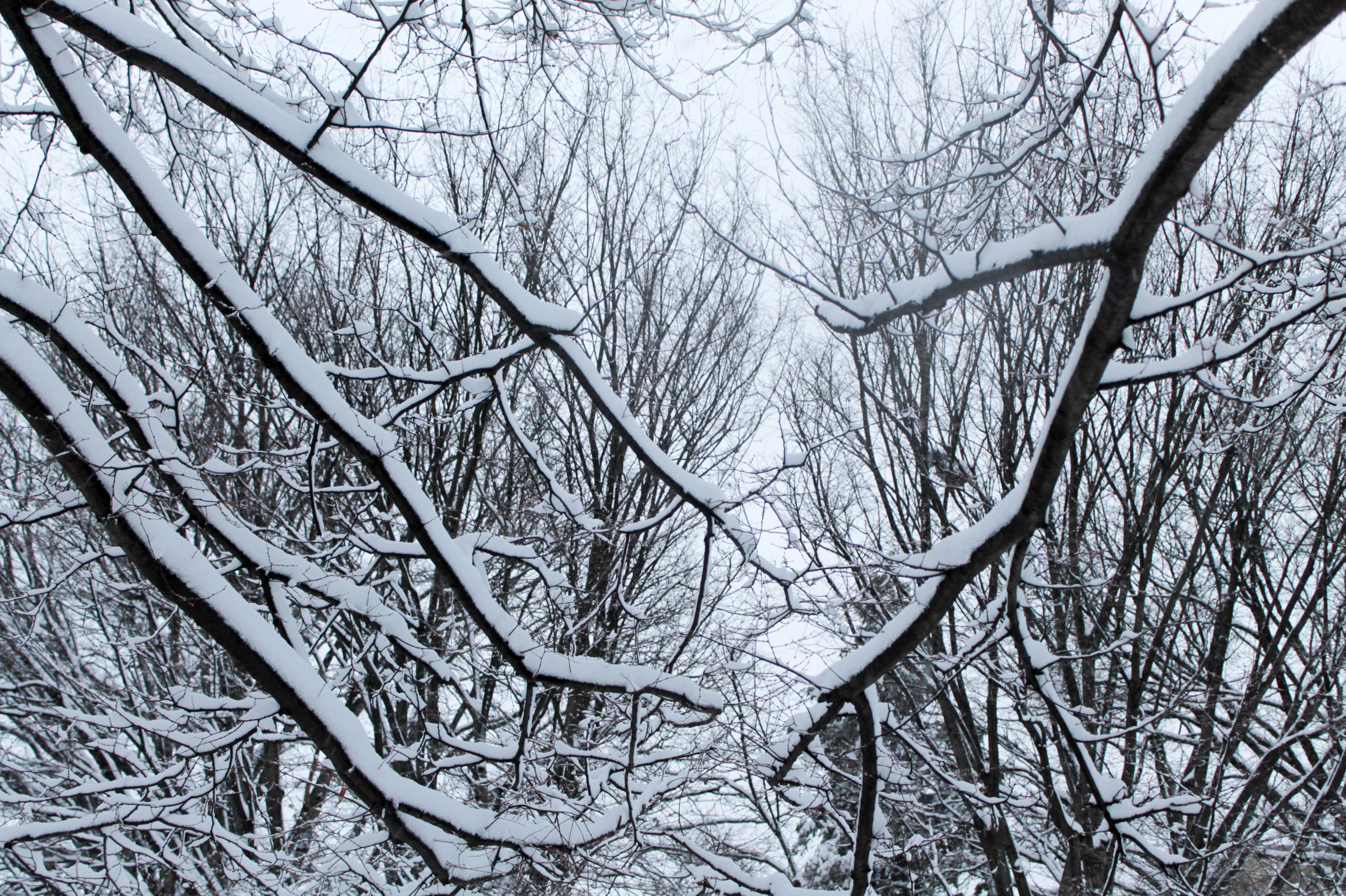 Snow-Day-Meridian-Hill-Malcolm-X-Park-Washington-DC-17.jpg