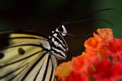 Papillons en Liberté 2015 - Photo 17