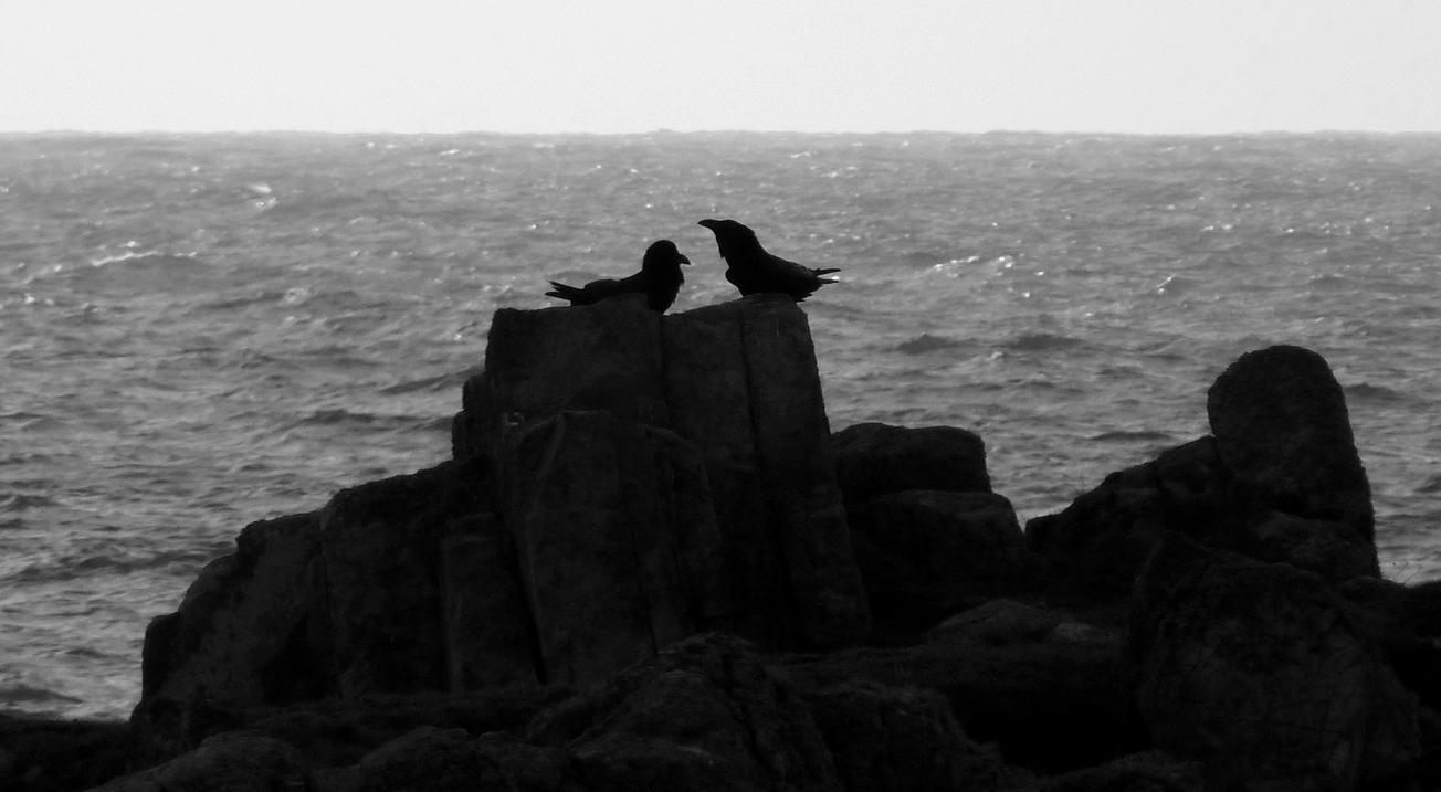 Ravens Pulias 4Mar15