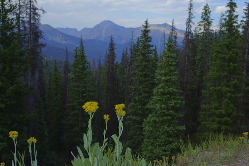 monarchpass flowers trees mountains landscape view colorado sanisabelnationalforest nationalforests green yellow wideangle