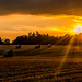 summer harvest by peterbaird100