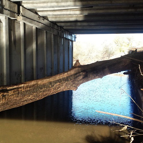 Shoulda brought my chainsaw. This tree is wedged across the entire trail under Montague  Expressway.