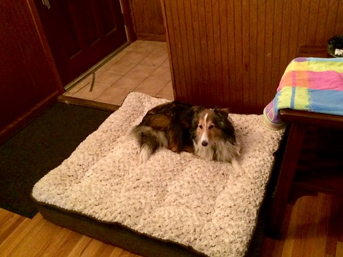 Maggie on the new dog bed.