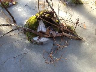Anderson bulette Friday frozen red oak swamp