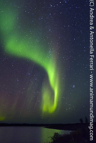 reefwondersdotnet posted a photo:	Northern Lights aka Aurora borealis, Wolf Lake, in the tundra of Nunavik province, Northern Quebec, Canada.