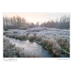 Autumn Morning, Ellis Creek