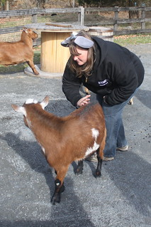 Barb and the goats
