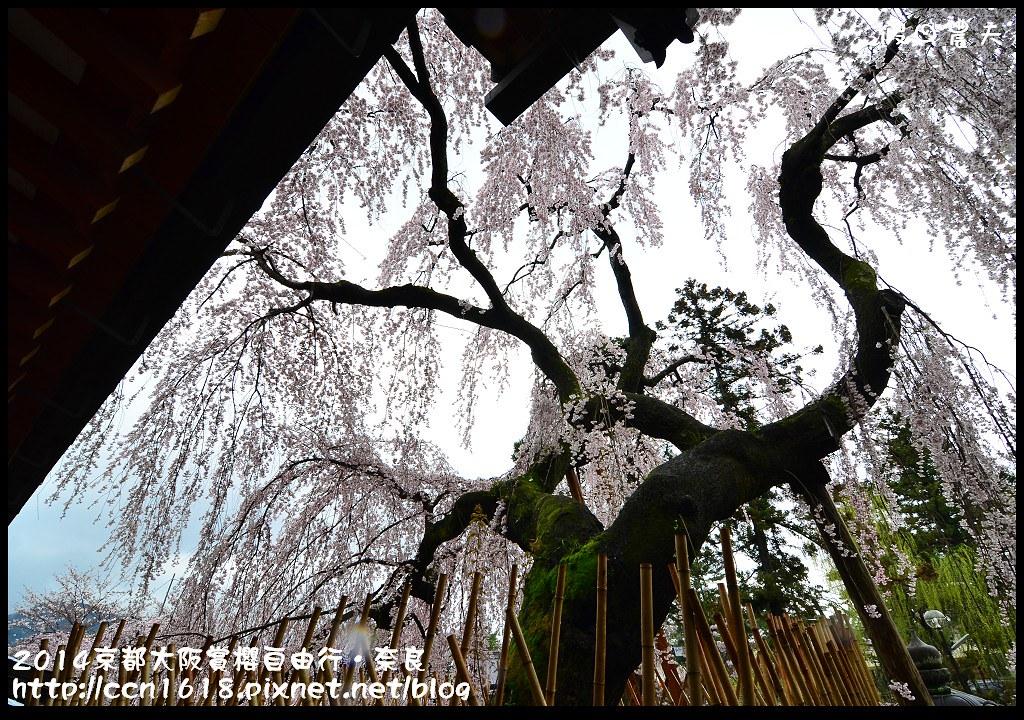 2014京都大阪賞櫻自由行.奈良DSC_0899
