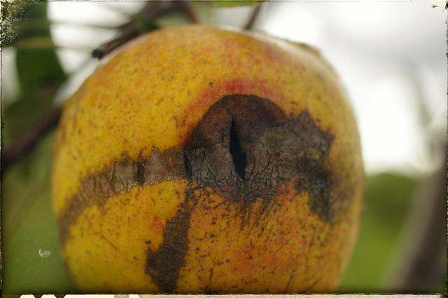 Apple of my EYE OF SAURON