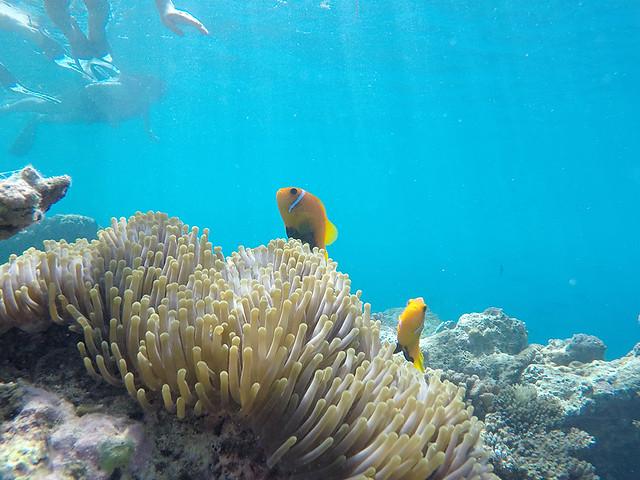 Finding Nemo - Maldives