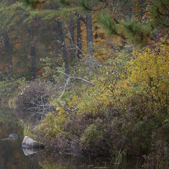 Arbres sur le lac...!!!