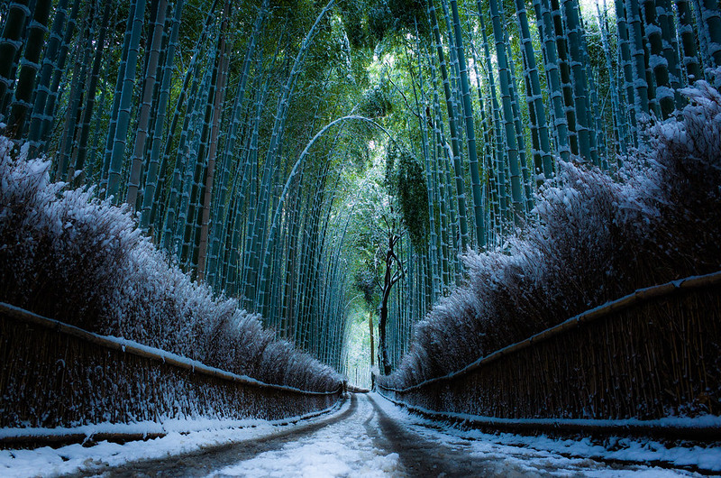 the path of bamboo, revisited #30 (Sagano, Kyoto)