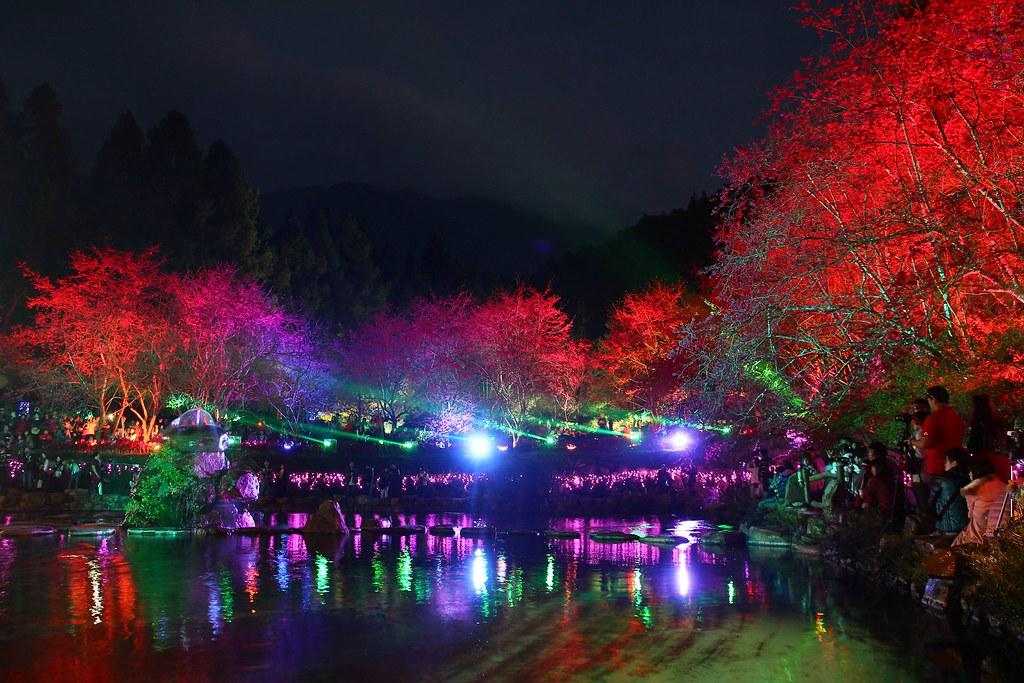 九族櫻花祭 (97)