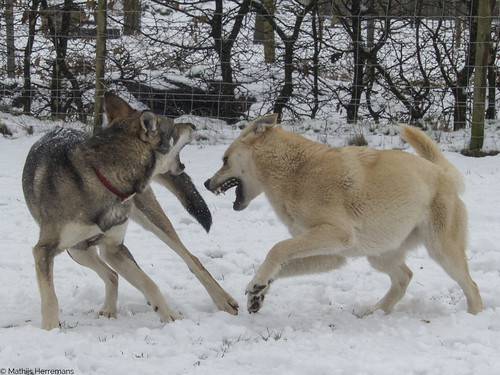 Yuma: *hap*. Snowy: *hap*.