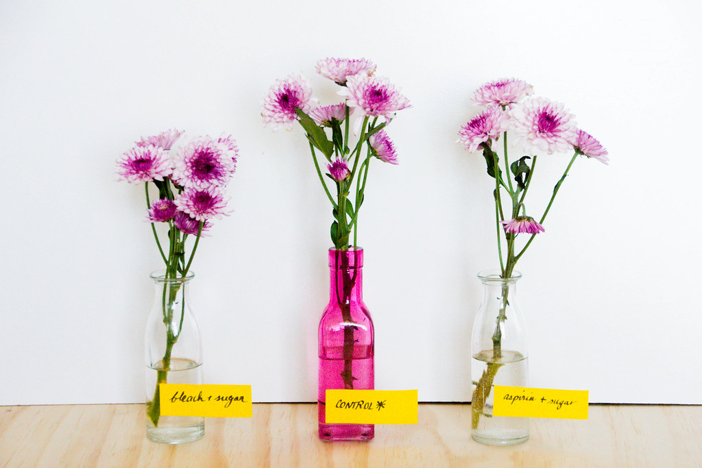 FlowerExperiment-Day1-IMG_2581