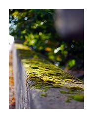 Moss_2