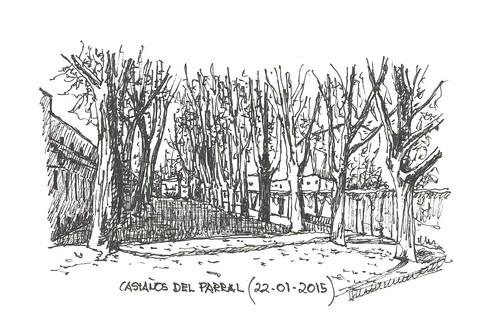 Castaños en invierno en el Parral de Burgos