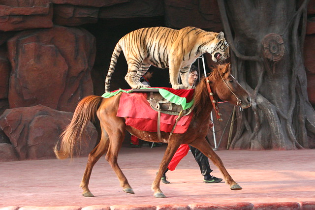 Tiger on horse performance at Chuanlord Manor, Hong Kong 2010 (4)