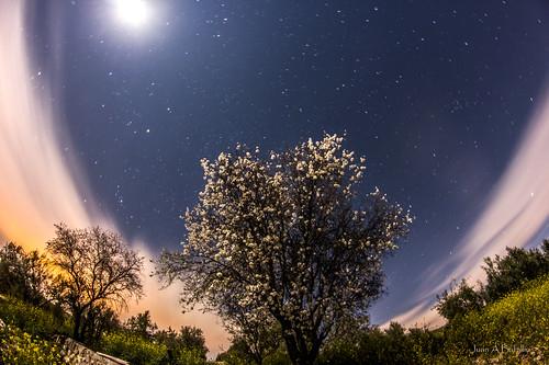 Almendro en flor y Luna