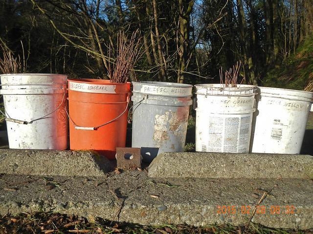 Five buckets of fun!