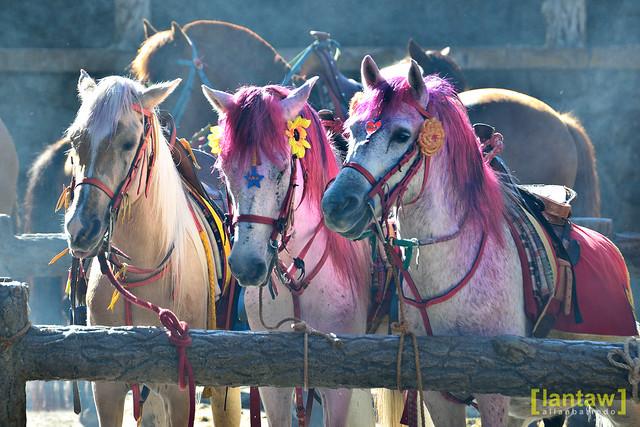 Wright Park horses