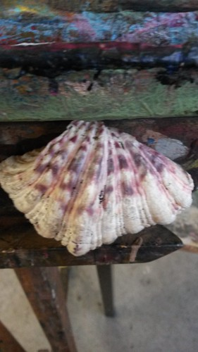 Shell for colour study