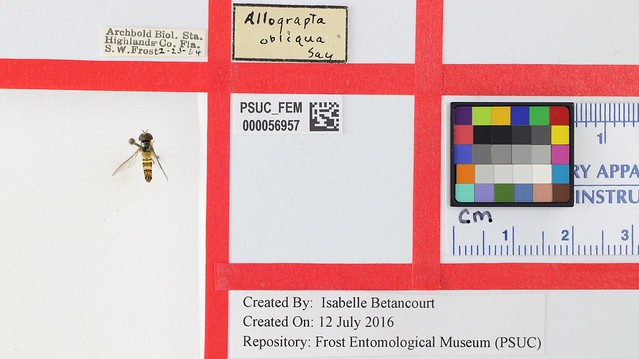 Pinned insect digitization layout with small color reference pad.