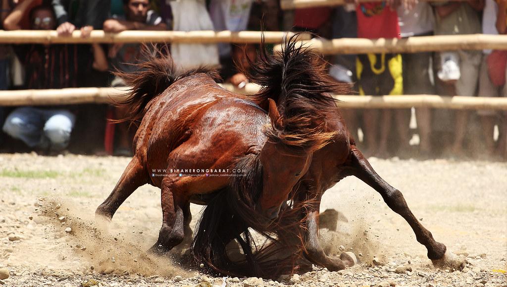 Horse fight glan sarangani