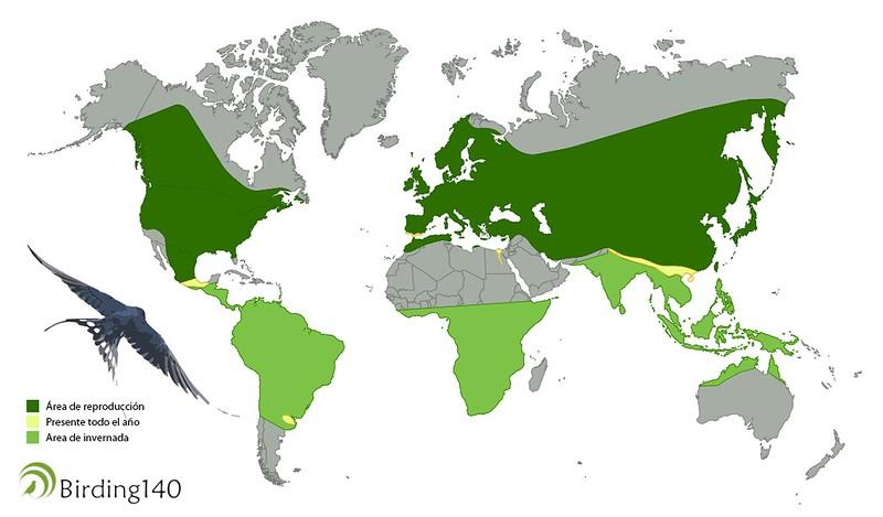 Mapa de la golondrina común (Hirundo rustica) en el mundo