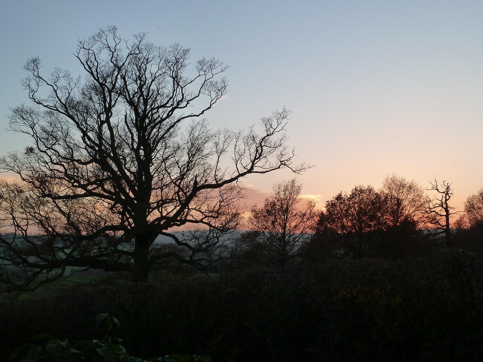 Silhouettes, Autumn Sky (Eridge Circular)