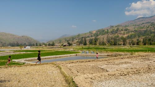 travels nikon ricepaddies ricefields 2014 timorleste aileu d800e nikond800e lahae jasonbruth timorlorasae