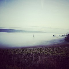 Dans ma #Vallée. #hiver #Brouillard #Soleil #Oeuilly #Champagne #Tarlant