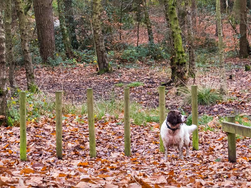 Max in Longmeadow Lane Woods