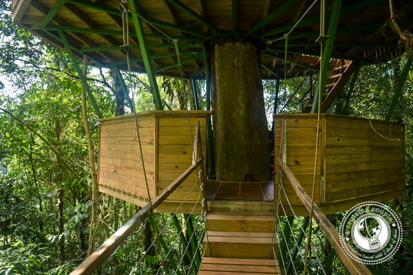 Real Treehouse at Finca Bellavista