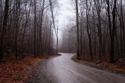 trees winter wet rain fog westchestercounty unpavedroad southsalem lewisboro nikkor2470mmf28 nikon2470mmf28 oldchurchland