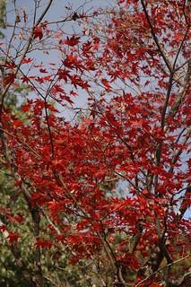 039 Herfst in Kyoto