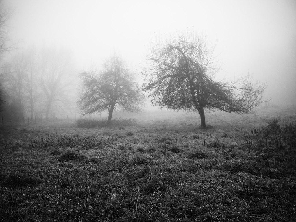 Habillé d'hiver. 16103169831_d4ef2aa33c_b