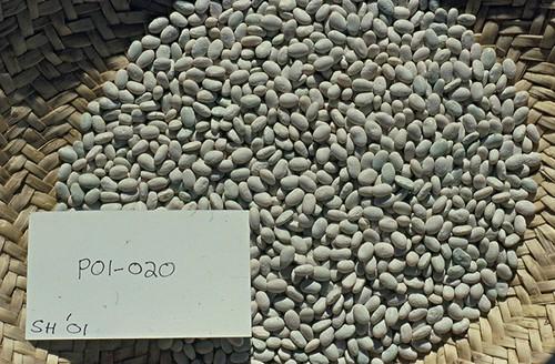 P01-020 SH01 S