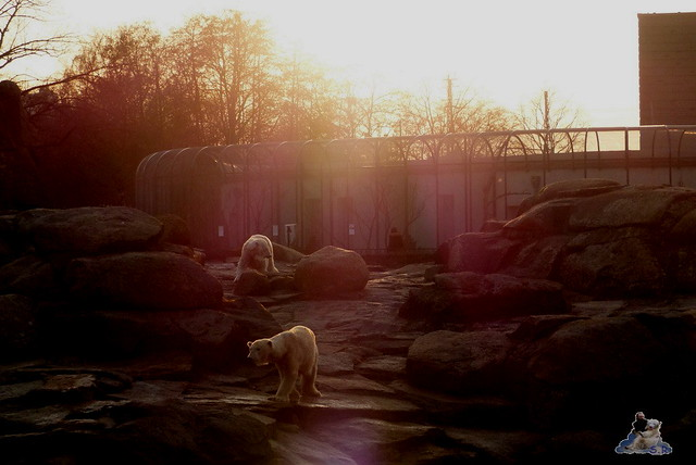 Zoo Berlin 19.03.2015  50