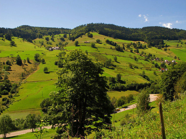 Green Summer Landscape - Black Forest, Germany