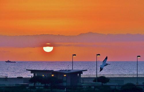 sunset nikon sunsets pacificocean wetlands photoart artisticphotography bolsachica orangecountyca bolsachicawetlands huntingtonbeachca bolsachicaecologicalreserve californiawetlands natureasart p510 coastalwetlands walkingbolsachica janeelizabethlazarz pacificcoastalwetlands