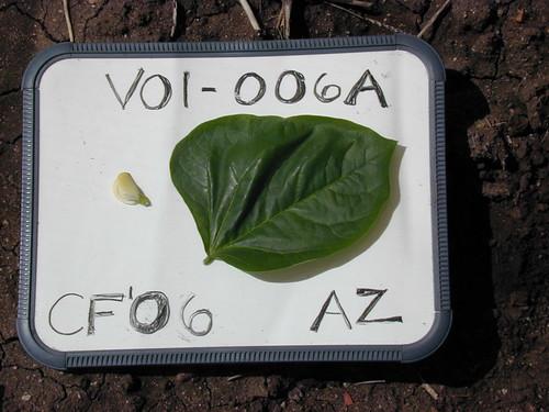 V01-006A CF06 F1