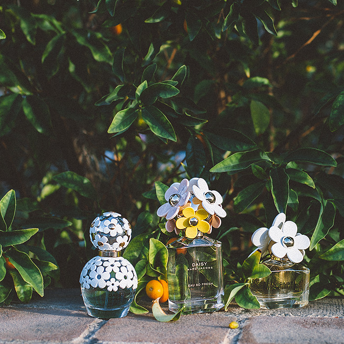 Marc Jacobs Daisy Fragrances | HONEY & SILK