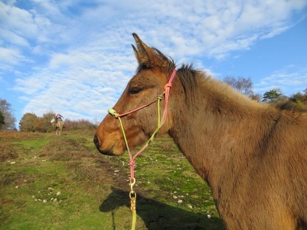 Punchbowl Mule