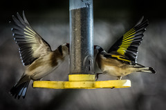 Saltholme RSPB - Bird Wings