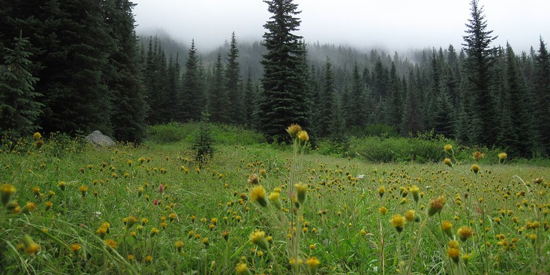 Rainy meadow and flowers near the junction with the Mebee Pass Trail