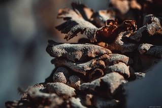 Fungi -Massapequa Nature Preserve