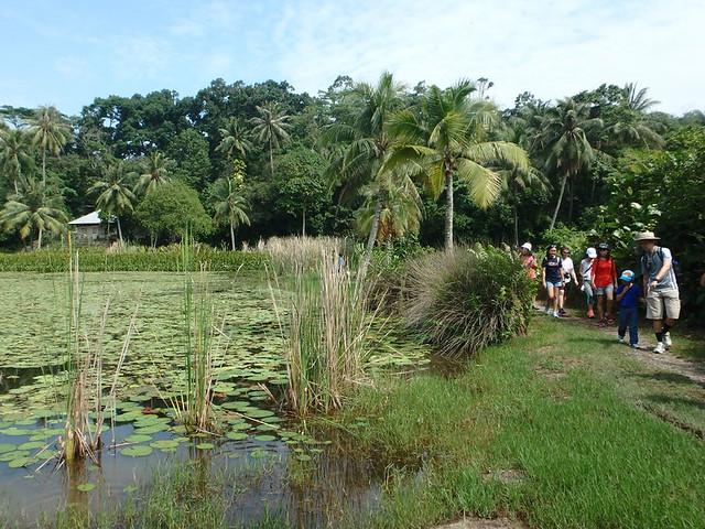 Free mangrove walk with Restore Ubin Mangroves (R.U.M.) Initiative