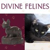 Do you have this season's LBC (little black cat)? No? Well stop by the DMA tonight until 9:00 p.m. to browse the collection of Divine Felines and plan a visit to @spcatexas to take home your own fashionably furry friend like Artemis (she is at the Jan Ree